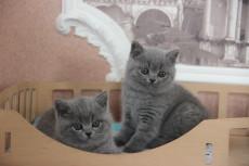котик слева свободен, справа резерв