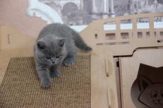 Котик 1 свободен